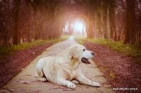 Dierenfotografie_19