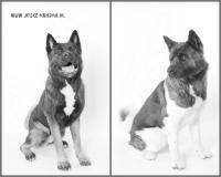 Dierenfotografie_2