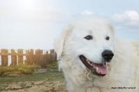 Dierenfotografie_34