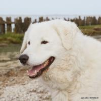 Dierenfotografie_36
