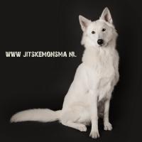 Honden fotografie_3