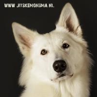 Honden fotografie_4