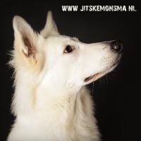 Honden fotografie_5