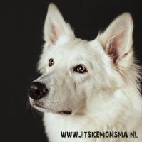 Honden fotografie_6