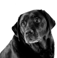 Honden op de foto